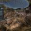 Игра Europa Universalis IV: The Cossacks
